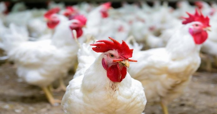 Bird flu outbreaks are on the rise across the country the Center has issued a stern warning