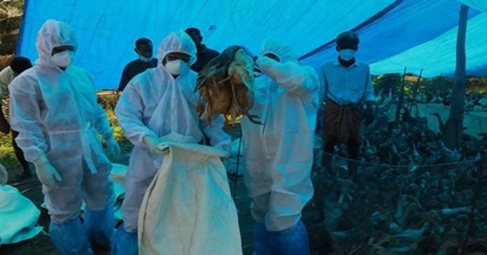 bird flu samples have been found in 12 states
