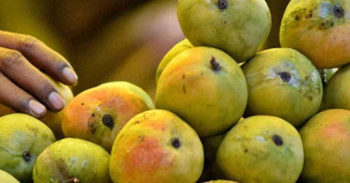 to recognize good ripe mangoes