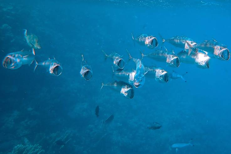 Open a Company in the Aquaculture Sector in Turkey