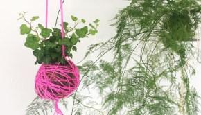 Hanging basket holding a plant