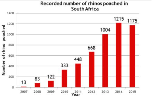 SouthAfricaRhinoPoaching2015_medium