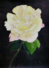 Evening Beauty Acrylic on canvas paper 40 cm x 30 cm unframed 55cm x 45 cm framed with white mount, black frame Price: unframed + mount £95.00 framed £150.00