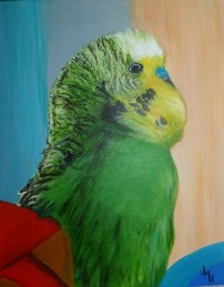Billy Budgie 1 (799x1024)