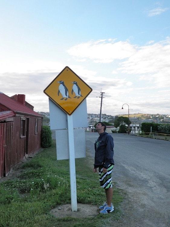 Placa de estrada de pinguïn na Nova Zelandia