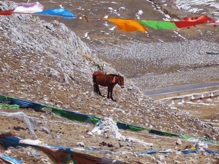 Bandeiras de oração Budistas com cavalo em Montanha Sagrada em Litang Tibete China