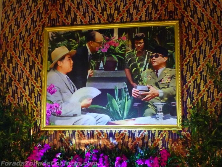 """flor """"especialmente criada"""" para Kim il-Sung - chamada Kimilsungia"""