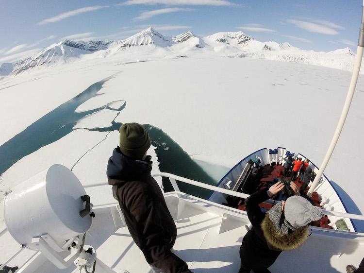 Procurando vida Selvagem em Svalbard