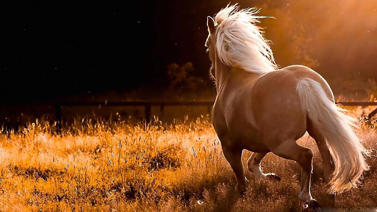 horses_12-wallpaper-1280x720