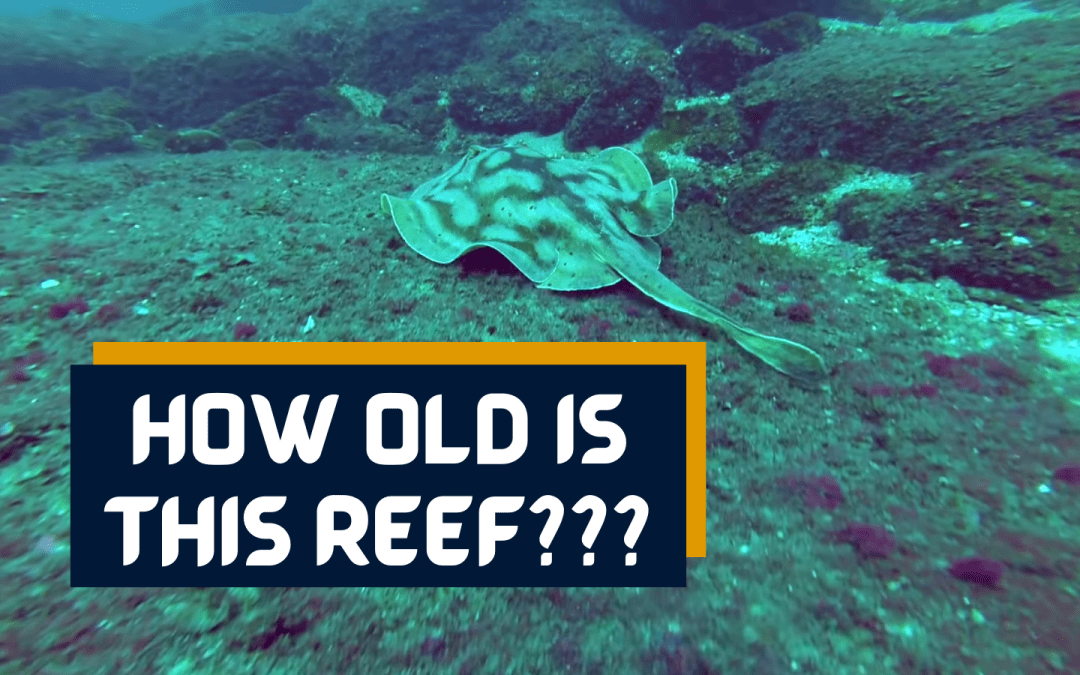 20,000 Year Old Reef in Mexico