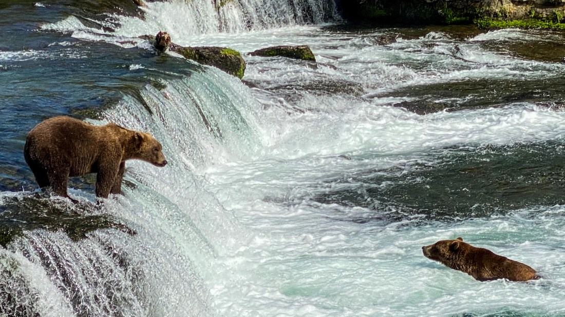 It's Grizzly-Viewing Season in Katmai National Park