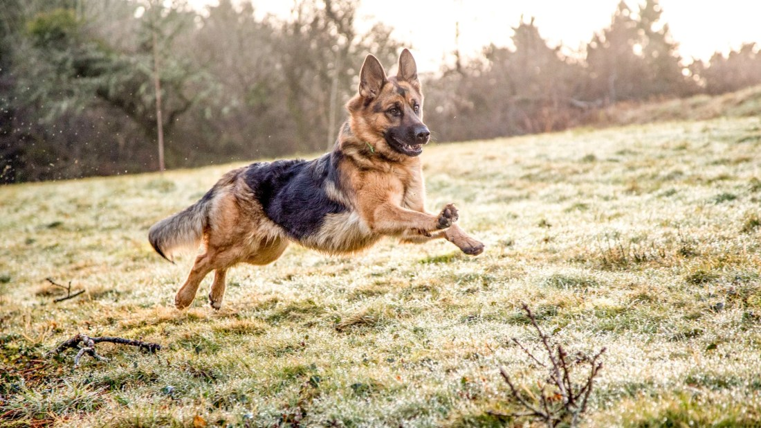 These 7 Dog-Training Principles Work for Humans, Too
