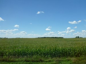 Large Corn Fields In Indiana