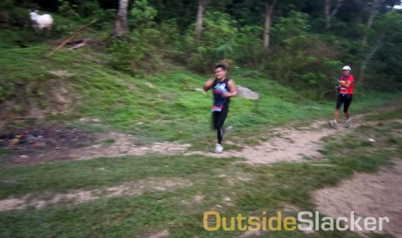 Runners going downhill during the Love a Tree Ultramarathon