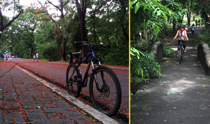Biking in the UP Diliman campus