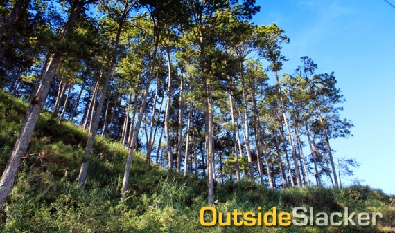 The tree-lined paths of Sagada