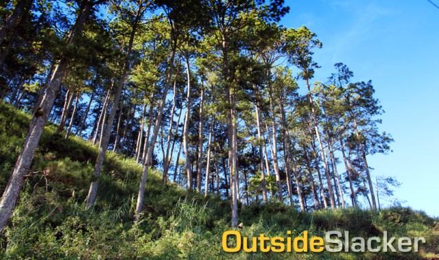The tree-lined paths of Sagada