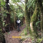 Mountain Biking in Rotorua, New Zealand