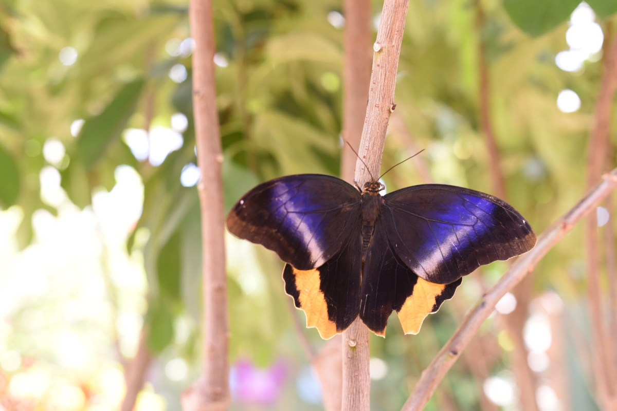 Butterfly Wonderland : One of my Happy Places