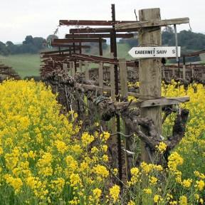 napa-valley-wineries-hdv