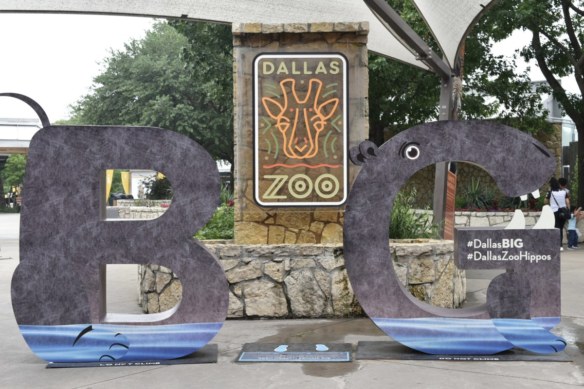 A Day at the Dallas Zoo : Waddling Penguins, Cute Koalas and Feeding Giraffes