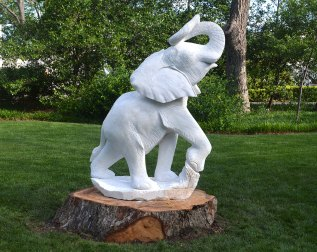 Bull Elephant, Tafadzwa Edias Sachiwo (2)