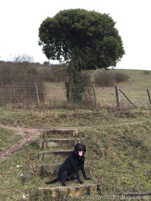 Darland Banks - Tree