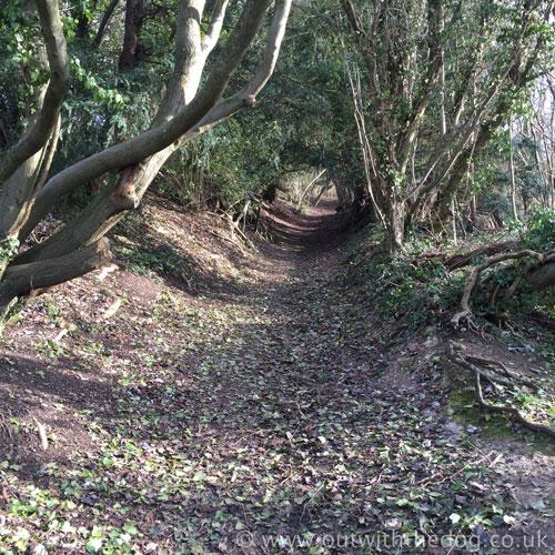 Blue Bell Hill woodland footpath