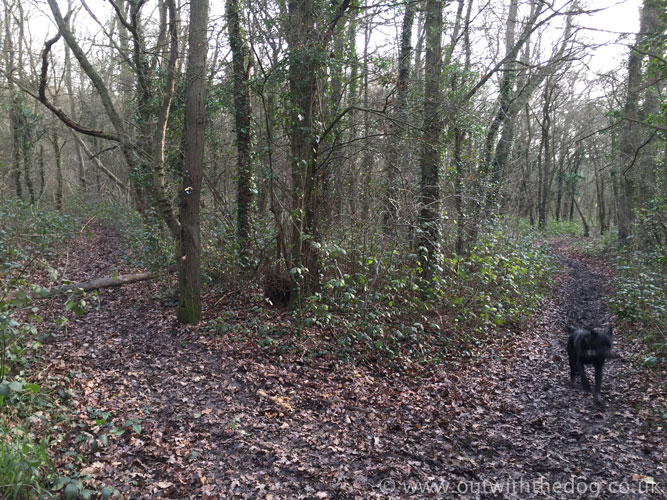 Cliffe Woods track Junction