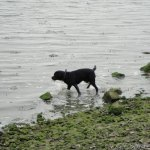 Riverside Country Park Dog Paddle