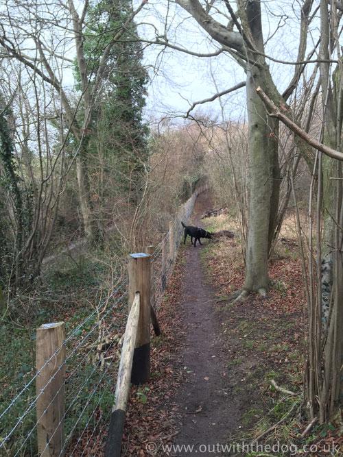 Queendown-Warren-Field5-fence-path