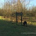 White Horse Wood Woodland Junc