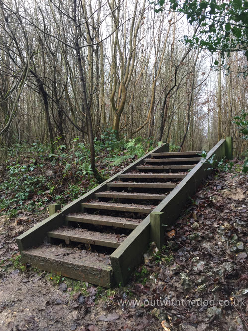 Hucking Woodland Steps