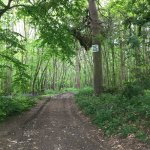 Greatpark wood - Footpath through the woodland.