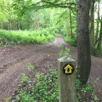 Greatpark wood - Heading along the North Downs Way.