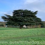 Lullingstone Country Park: Tree in a field