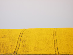 colza agrocarburant biocarburant