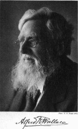 Alfred R. Wallace, un an avant sa mort.