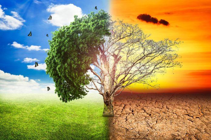 Çevreye Sahip Çıkmak Geleceğimize Sahip Çıkmaktır