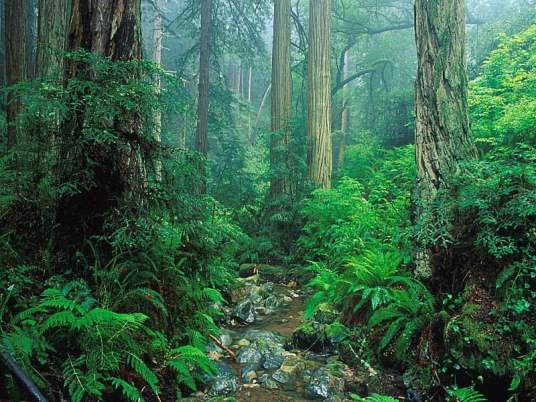 21 Mart / Orman Haftası