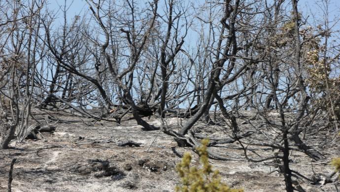 Bingöl'de 4 gündür süren yangın büyük zarar verdi