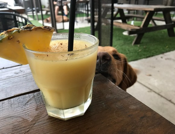 The best dog-friendly bars and patios in OKC!
