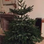 kerst boom kaal in huis 2015