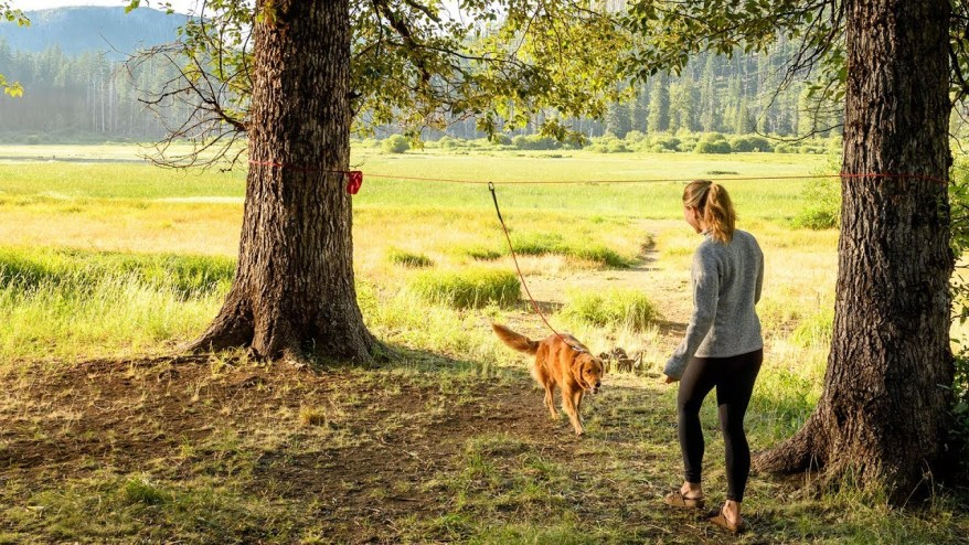 Best camping gear for dogs - Campsite hitching system Ruffwear