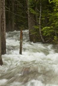 A swollen Creek