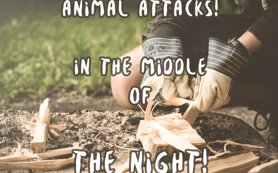 Animal Attacks In the Middle of the Night – A Story