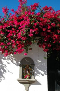 Alamos (Flowers and niche)