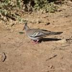 Bird at Dalhousie Springs