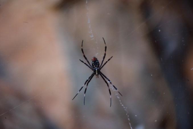 spider Culvida soak