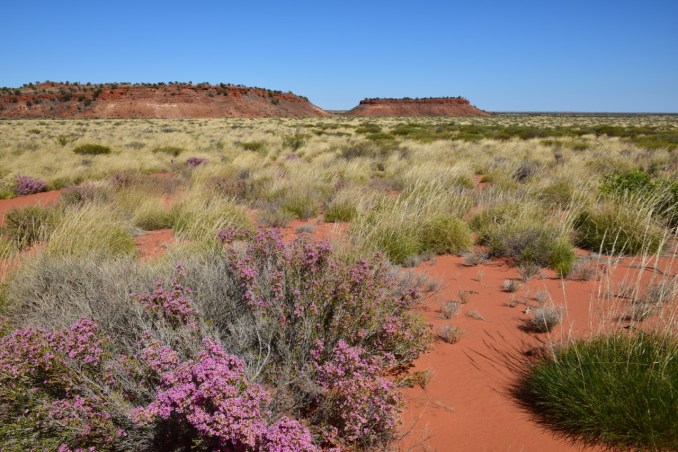 Pink flowers and red earth